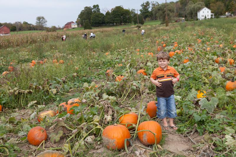 Pumpkin_2010_01