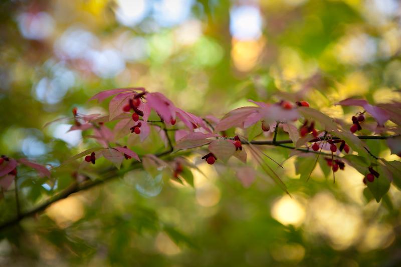 Fall_2010_04